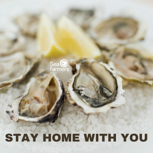 stay home promo oysters